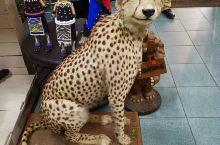 豹子,南非野生动物五霸之一。