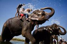幸福国度~尼泊尔  奇特旺国家森林公园 一起骑着大象追逐独角犀牛 梅花鹿等各种野生动物吧