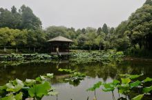 唐闸公园+琵琶小院