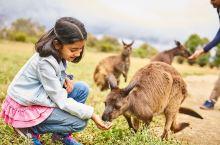 #南澳萌物# 南澳大利亚州( South Australia )的纯净天地—— 袋鼠岛(Kangar