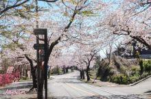 没坐到去大室山的车,索性开始徒步,在3公里的樱花大道偶遇一家狗狗主题餐厅,食客们带着狗狗去用餐,有一