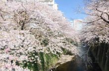 东京赏樱的宝藏地 上野公园和千鸟渊作为传统赏樱地,不会让人失望,而给我最大惊喜的是神田川。从早稻田站
