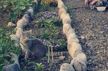 屋久岛的小猫咪