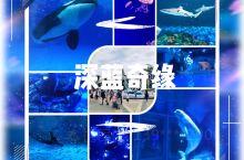 开了一段时间的上海海上海洋公园,一直没机会去,乘着这国庆去玩了一趟,完全超预期的游园体验呀~ 入园先