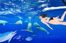 """长假期间和朋友去了南太平洋的小岛国""""纽埃"""",一个只有1200人口的国家。这里有长久居住着的海豚,海豚"""
