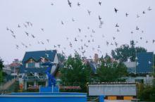 秦皇岛鸽子窝公园 初来北戴河,从深圳出发,直飞天津,天津站转高铁到秦皇岛站搭的士(后来发现北戴河站才