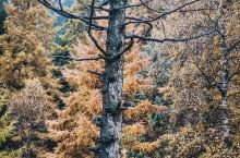 秋游庞泉沟 |每年的十月是庞泉沟秋色的最佳观赏期,于是我们自驾去庞泉沟国家级自然保护区。秋天的庞泉沟