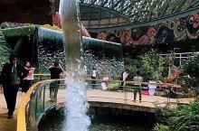 花之城拥有全球最大花卉主题温室——南亚花卉博览中心。这里有世界花卉种质资源圃,万彩翎羽下的花海奇观。