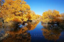 醉美金秋       十月的金塔胡杨林景区让人如痴如醉,流连忘返。       进入景区,满目的金黄