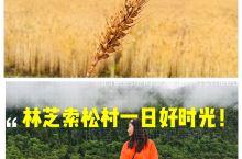 索松村一日好时光/秀美林芝 偶遇普布  索松村,一个看似普通的工部藏族村庄,藏猪懒散踱步,牦牛自由穿