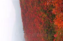 这几天有时间的可以去三门峡黄河丹霞风景区去看看红叶,非常漂亮