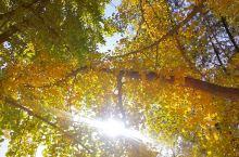 秋天有它独特的意境,秋叶洒落处,遍地金华;柔光穿透处,温暖醉人,那一份静美,含蓄多彩,让人回味。即便