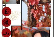 深秋玉渡山       玉渡秋的秋景非常迷人,红叶之美一点不亚于香山,关键人少,山上只有树叶的热闹场