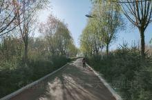 老虎山生态公园秋叶金黄,漫步林荫道,欣赏一下秋景,感觉静美!