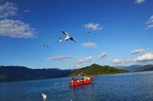 美丽的泸沽湖,格桑花盛开的季节,松茸与红酒的邂逅,湖波荡漾中漂曳着洁白透亮的海菜花。 摩梭儿女们划着