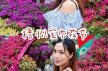 姹紫嫣红的宝巾花展。宝巾花是梧州市花。宝巾花又名叶子花,三角梅等,为强阳性、喜欢高温,属于半木半藤的