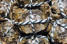 阳澄湖的大闸蟹就是不一样,油光锃亮!