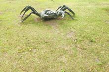 阳澄湖的大螃蟹,上岸了