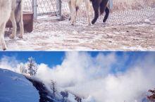 乐府诗集《敕勒歌》中曾描写草原:天似穹庐,笼盖四野,天苍苍,野茫茫,风吹草低见牛羊乌兰布统则大有雪粉