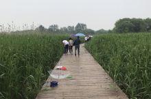 西沙湿地公园,小螃蟹满地爬,大家一起来钓螃蟹啦!湿地的底栖动物高潮带主要为无齿相手蟹和红螯相手蟹,池