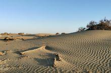 无尽沙漠,千年胡杨