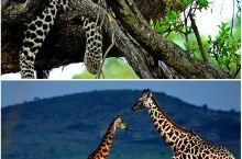 非洲,从来都是一片探索者向往的土地,它是自然界的奇观,更是动物的天堂,在这里可以放下一切,用心去全部