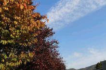 秋天观银杏