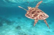 巴里卡萨岛浮潜看到大海龟!第二天学会了浮潜就看到了海洋神奇的打开方式,水下的风景无限美好!新年第一天