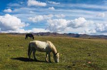桑科草原&湿地,来的时间不是草原最美的时候,但是还是美的,只有几匹马,也没有别的游客,那匹黑色的马还