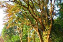 胡志明故居 胡志明故居的植物很具特色,点缀得很是雅致。 胡志明(1890年5月19日-1969年9月