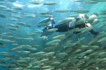 菲律宾薄荷岛邦劳北部malave 悬崖,风暴鱼。很浅的地方就能看到。浮潜没问题。