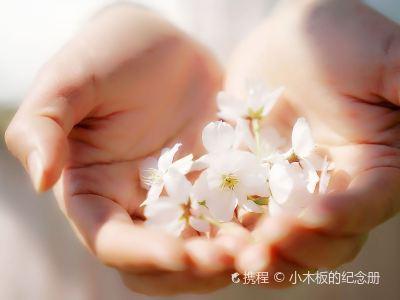 豐樂櫻花園