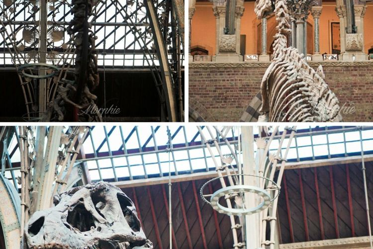 Oxford University Museum of Natural History4