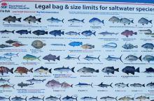 公告牌上公示了可以钓的鱼种类尺寸和重量