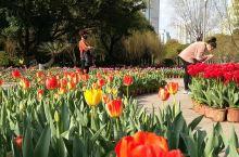 温州公园里的花都开起来了。