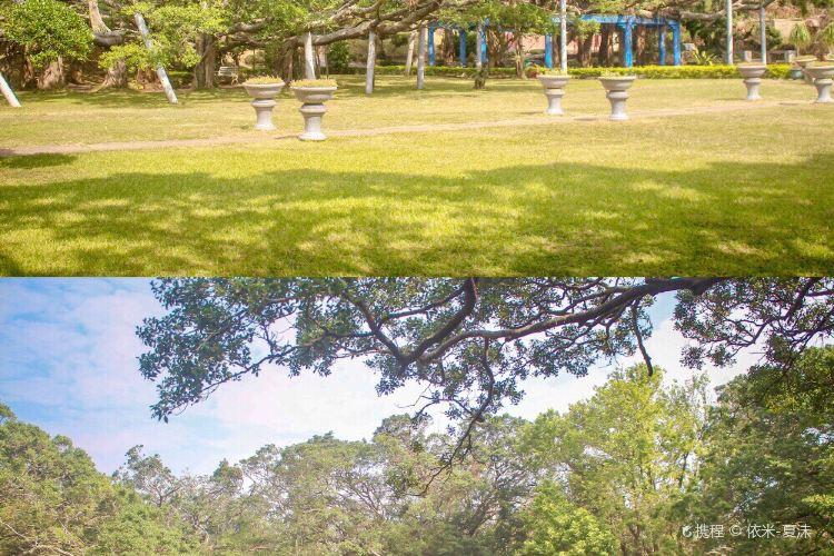 Banyan Park4