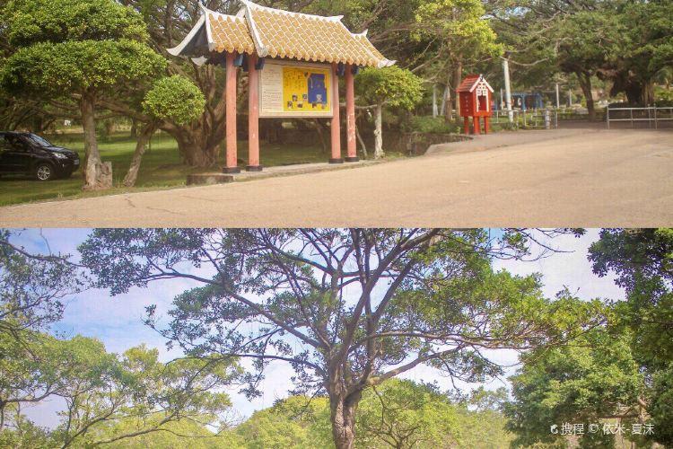 Banyan Park2