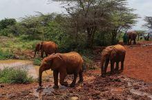 市区内的大象园,貌似有两大象家族,每天十一点开门,观看一个小时,十二点关门。主要是看饲养员喂大象,有