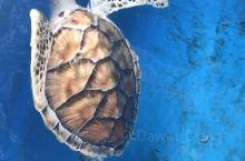 免费的水族馆,有各种常见海鱼,n种珊瑚,PD 性价比最最最好的地方,适合带娃游