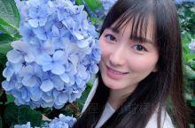 这次去台北正好赶上了绣球花的尾巴,我是6月17号上午去的,很多花已经谢了,需要找合适的位置拍照、附近