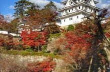 日本自由行之岐阜县郡上八幡 这是个小众旅游地,国人一般不去,除非自由行,否则可能到不了。 一个古镇的