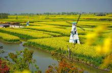 每年的三四月份,莺飞草长,花事一场接着一场,最耀眼的一抹黄色,就要属油菜花了。兴化是国内唯一一个水上
