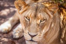 来到南非当然少不了与野生动物接触,在阿奎拉私人野生动物保护区,可以零距离与大自然接触,狂野的非洲风情