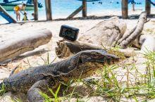 这巨蜥得吓死宝宝吧,其实参照物RX0才火柴盒那么大,防水防啥不怕啃。 说真的,最开始我挺怕它咬我的,