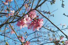 我在永福樱花园