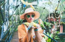【菲律宾拍照胜地】鸟语花香的达沃巧克力花园度假村  酒店名:马拉格斯花园度假村(MalagosGar