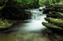 森林里的小溪