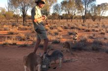 澳大利亚北领地-爱丽丝泉的袋鼠庇护站,Chris讲述筋肉袋鼠Roger的故事