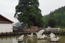 周宁鲤鱼溪