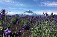 花丛中的富士山